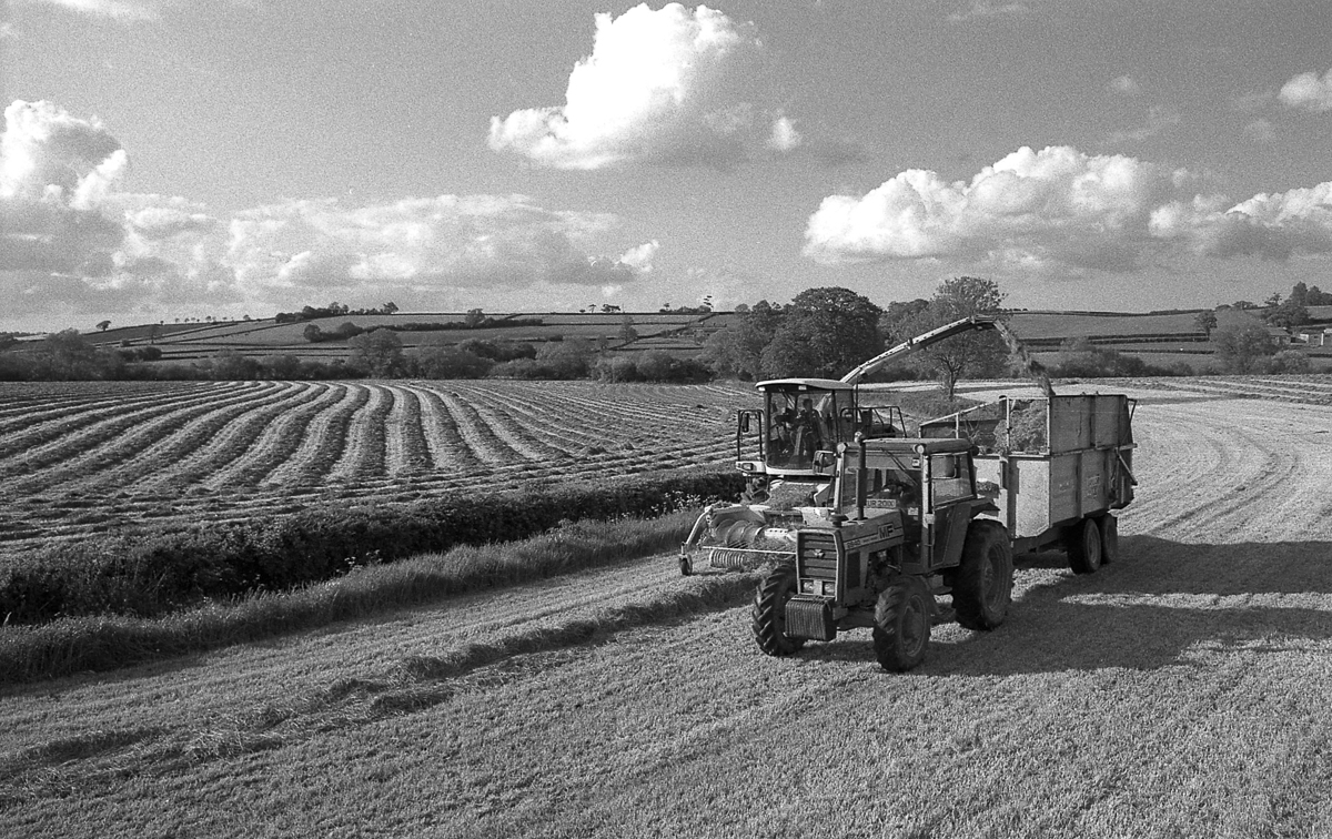 Steps In Silage Making