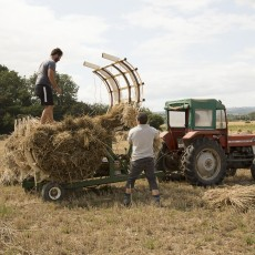 Loading thatching reed