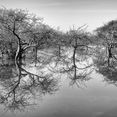 Refection